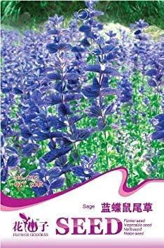 Vista Graines de Sauge Papillon Bleu Fleur Rare, paquet dorigine 50pcs Jardin bonsaï graines de Fleurs, facile grandir Salvia officinalis: Amazon.es: Hogar