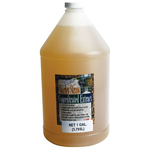 ECOLOGICAL LAB MLCBSE2L ML BARLEY EXTRACT 64OZ