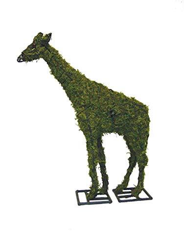 Giraffe 38