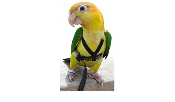 Aviator Pájaro Arnés & Correa - Totalmente seguro Pájaro sistema ...