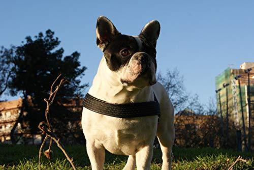 Print Cotton Dog Collar - Home Comforts Canvas Print Pet Dog Park Bulldog Collar Pedigree Vivid Imagery Stretched Canvas 32 x 24