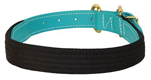 (Perri's DC800 Beta/Cotton Dog Collar, Medium, Black/Turquoise)