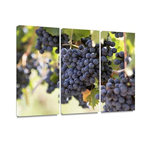 Grapes in Vineyard Print On Canvas Wall Artwork Modern Photography Home Decor Unique Pattern Stretched and Framed 3 Piece