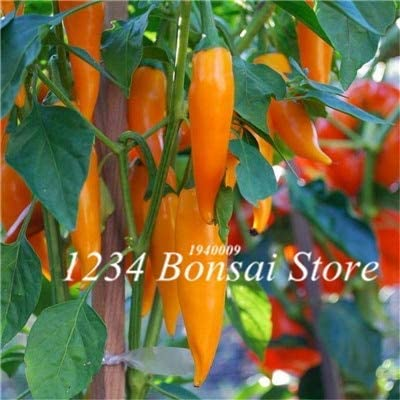 vegherb Neuer 200 PC-Pfeffer Chili Bonsai Gemüse Frischer Baum, Multi-Color Gemüse Leicht Growing Paprika Chili S DIY Hausgarten 7 (Seeds Only)