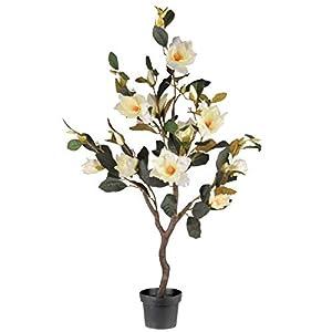 """National Tree 48"""" Magnolia Tree 48"""