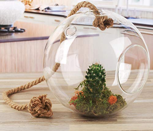 (Circleware 32512 Nature Grow Glass Round Hanging Terrarium on Rope Home Decor Flower Balcony Display Box and Garden Gifts 7.87