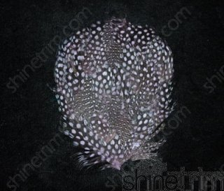 Millinery Trim (Speckled Guinea Pad (ass't Colors) By Shine Trim - Olive Green)