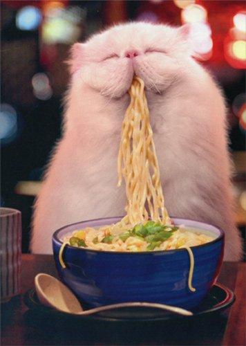 Amazon Cat Eating Steamy Noodles Avanti Funny Birthday Card