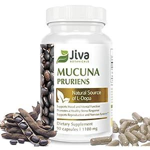 Gut Health Shop 41lAoSk9yaL._SS300_ Mucuna Pruriens Capsules ( 1100 mg ) – L Dopa Mucuna Advanced Mucuna Pruriens Powder & Velvet Bean Extract Formula – by…