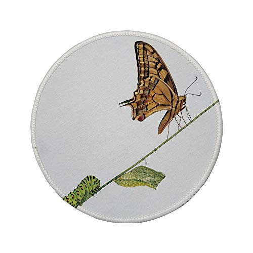 "Non-Slip Rubber Round Mouse Pad,Swallowtail Butterfly,Caterpillar Pupae Butterfly Lifes Stages Inspirational Nature Decorative,Light Brown Green,11.8""x11.8""x3MM"