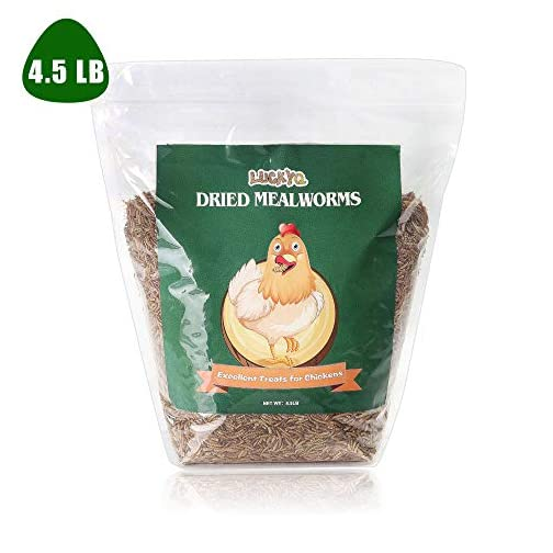 Non-GMO and Chemical Free All Natural Animal Feed Hamsters and Hedgehogs LUCKYQ High-Protein Dried Mealworms 1Lb for Birds Fish Turtles Chickens