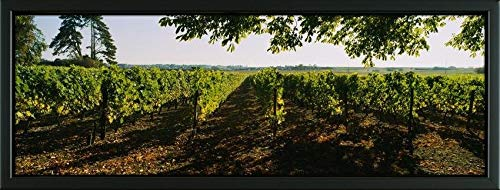 Easy Art Prints Panoramic Images's 'Grape Vines in a Vineyard, Loire Valley, France' Premium Framed Canvas Art - 24