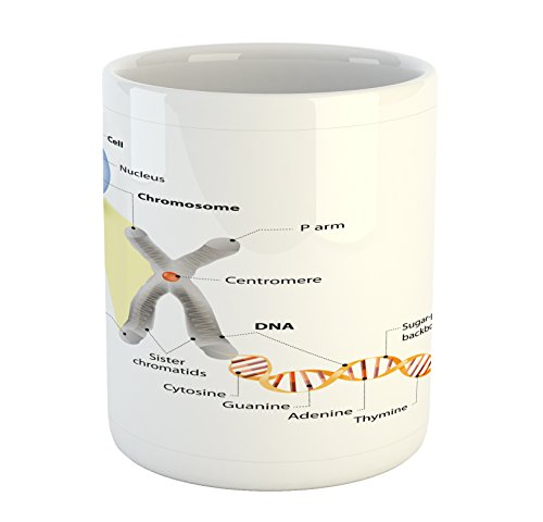 Ambesonne Educational Mug, Cell Chromosome DNA Gene Genome Study Double Helix Evolution Science Research, Printed Ceramic Coffee Mug Water Tea Drinks Cup, Multicolor