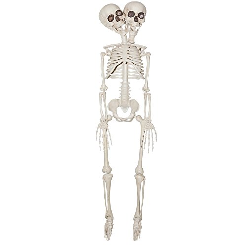 2-Headed Plastic Skeleton Prop 20in, Siamese (Siamese Twin Costumes)