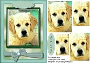 Hermoso Labrador cachorro, Pyramid by Ceredwyn Macrae