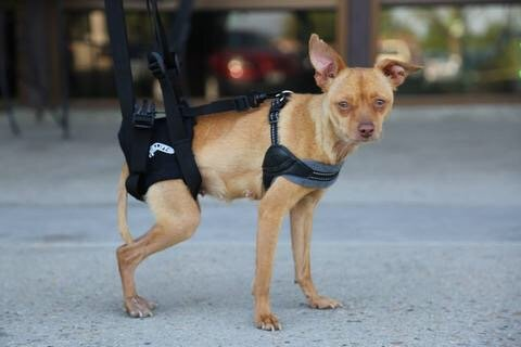 dog-lift-support-harness-airlift-one-size-small-walkabout-support-sling