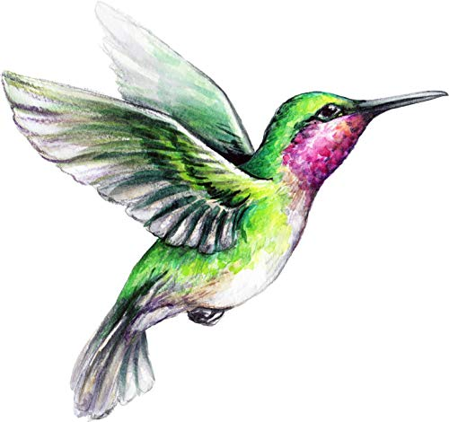 Abstract Art Magnet - Magnet Beautiful Vibrant Colored Hummingbird Art #5 Vinyl Magnet (4