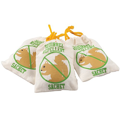 Squirrel Chasers Set of 3