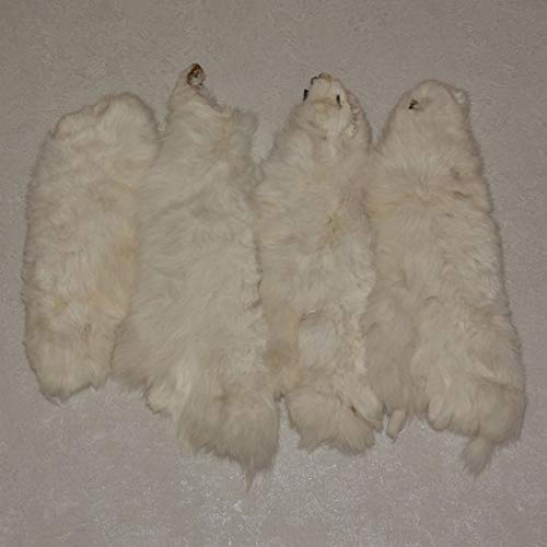 StoreTaxidermy LLC (Taxidermy Studio) White Hare LOT for sale  Delivered anywhere in Canada