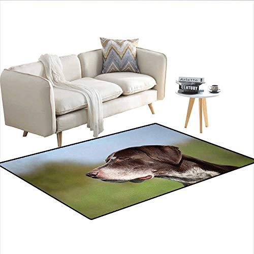 Floor Mat,German Short Haired Pointer in Wilderness Portrait Photograph Kurzhaar Pet Dog,Rugs for Bedroom,MulticolorSize:55
