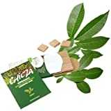 """Natural Mayan Chewing Gum """"Chicza"""" - 2 x 12 Mint Gums"""