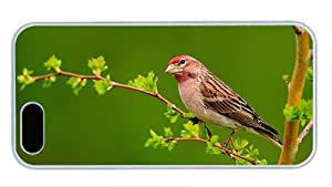 Fashion iphone 5 cassette cover Bird on the branch green background PC White for Apple iPhone 5/5S
