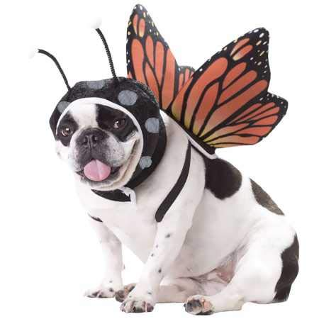 California Costumes Butterfly Dog Costumes, Pet, Multi, Small - http://coolthings.us