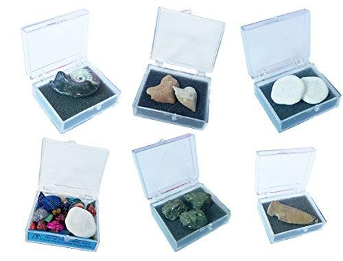 (Dr. Gigs Magical Box of Treasures! - Includes Shark Teeth, Fossils, an Ammonite and More!)