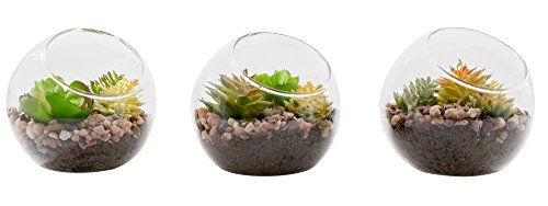 NeutralPure-ECO-Tabletop-Glass-Plant-Terrarium-3-Pcs