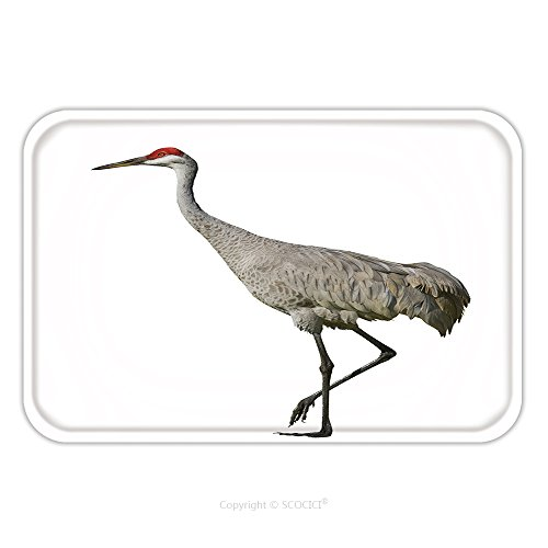 Flannel Microfiber Non-slip Rubber Backing Soft Absorbent Doormat Mat Rug Carpet Sandhill Crane Isolated On White Latin Name Grus Cannadensis 83330545 for (Gru With Wig)