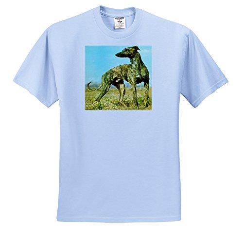 dogs-greyhound-brindle-greyhound-t-shirts-youth-light-blue-t-shirt-large14-16-ts-484-62