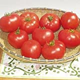 Tomato Amelia 100 seeds Review