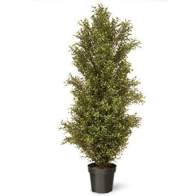 (National Tree 60 Inch Argentia Plant in Green Pot (LAR4-700-60))