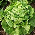 Organic Buttercrunch Lettuce Seeds - 50 Seeds