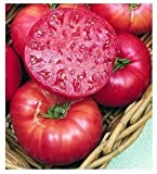 75+ Mortgage Lifter Tomato Seeds- Heirloom Variety- by Ohio Heirloom Seeds