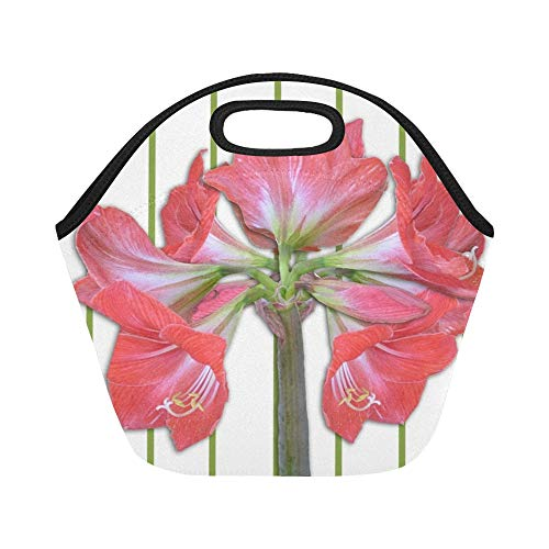 Insulated Neoprene Lunch Bag Amaryllis Flowers Amaryllis Plant Red Plant Large Size Reusable Thermal Thick Lunch Tote Bags For Lunch Boxes For Outdoors,work, Office, School