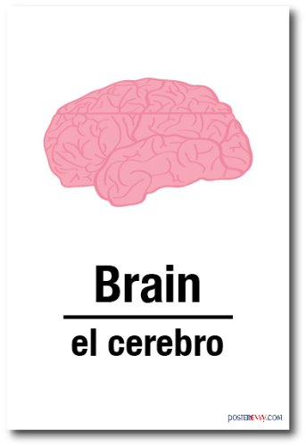 El Cerebro - Brain In Spanish - NEW Foreign Language POSTER