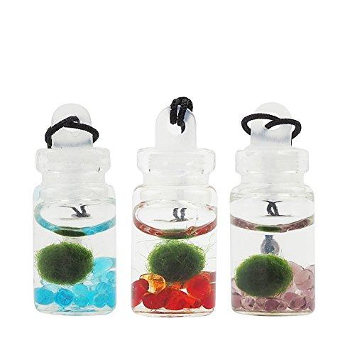 OMEM 3 Pack Mini Seaweed Balls Glass Bottles, Happiness Seaweed Ball Pendant, Algae Moss Balls Glass Jar Aquarium Terrarium (3 Pack Random Colors) - Mini Glass Aquarium