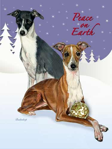 Italian Greyhound Christmas Cards : 10 Holiday Cards with Red Envelopes - ADORABLE!
