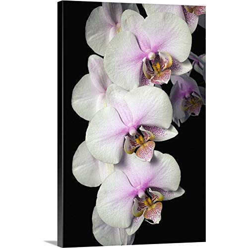 GREATBIGCANVAS Gallery-Wrapped Canvas Entitled Orchids by David Chapman 40