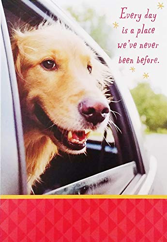 Hope today you enjoy looking back on all your achievements and looking forward to many new adventures! - Happy Birthday Greeting Card with Golden Retriever Labrador (Best Looking Golden Retriever)