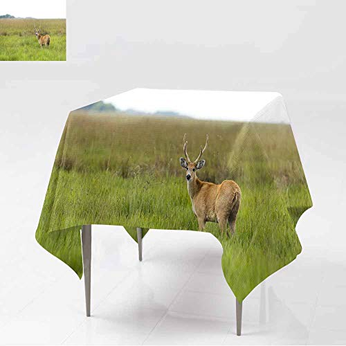 AFGG Washable Square Tablecloth,Male Marsh Deer (Blastocerus dichotomus) 2,Party Decorations Table Cover Cloth,36x36 Inch -