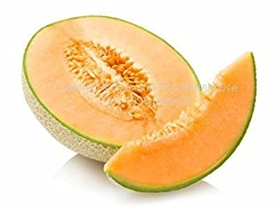 Hales Best Cantaloupe 25 seeds Sweet Aromatic Melon Early Producer Market Or Home - gets sweeter in hot, dry conditions 3 - 5 lbs