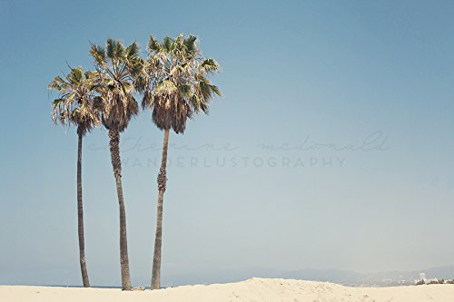 Venice Beach Photography Palm Tree Los Angeles Photograph California
