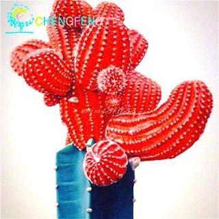 Pinkdose 200 pz Misto Pianta Succulente Lithops Ass Fiore In Vaso Mini Bonsai Per La Casa Giardino Forniture Alta Tasso di Germinazione piante di cactus: Grigio scuro