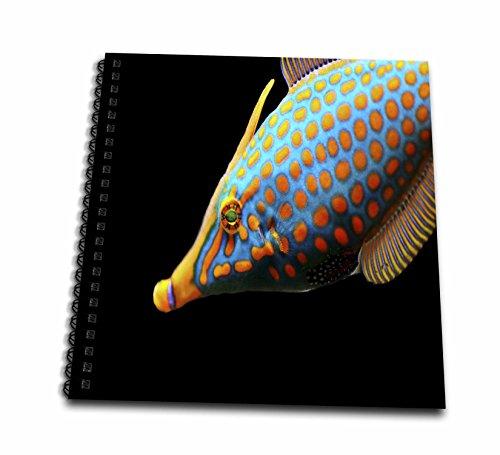 3drose Sea Lifeエキゾチック魚–イメージのエキゾチック魚赤のドットonアクアボディ–Drawing Book 8x8 drawing book db_256300_1
