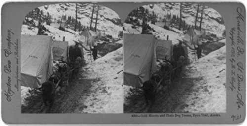 1898 Photo Gold miners and their dog teams, Dyea Trail, Alaska a man with dog team in front of tents. 1898 Photo Print