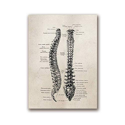 FAT BIG CAT Human Anatomy Science Vintage Posters Art Prints, Medical Anatomy Canvas Painting Medical Doctor Clinic Wall Pictures Decor,A5 15x21 cm No Frame,PH620