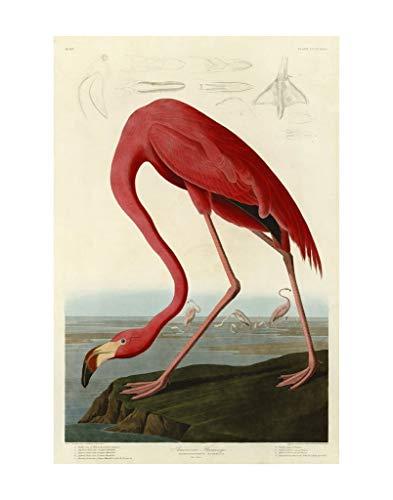 American Flamingo by John James Audubon Wildlife Bird Animal Nature Poster (Choose Size of Print)