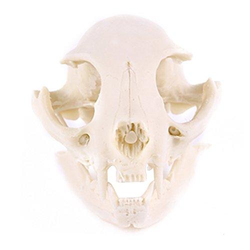 WINOMO Resin Fortune Cat Skull Skeleton Model for $<!--$9.99-->